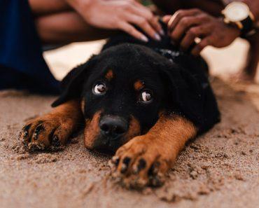 puppy beach trip