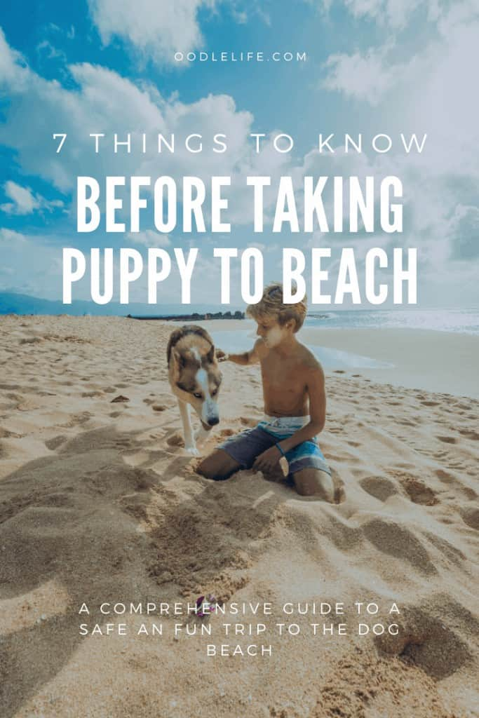 Infographic showing what to know before puppy beach trip