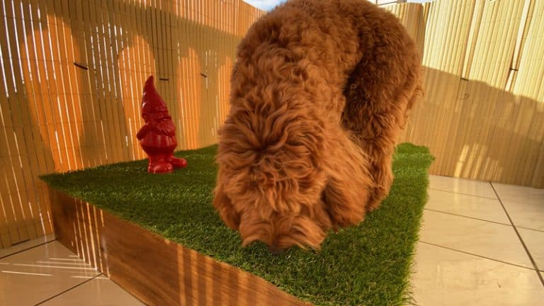 DIY Porch Potty With Drain – Complete Step-by-Step Guide to a Luxury Puppy Toilet