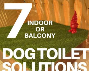 7 Best DIY Dog Toilet Solutions (Indoor or Porch Potty) 2