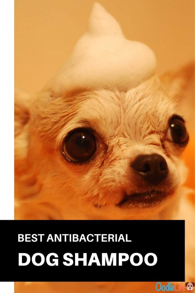 best antibacterial dog shampoo