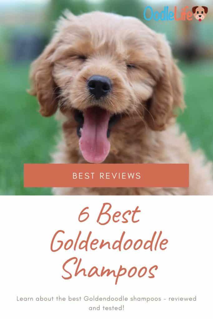 best goldendoodle shampoo