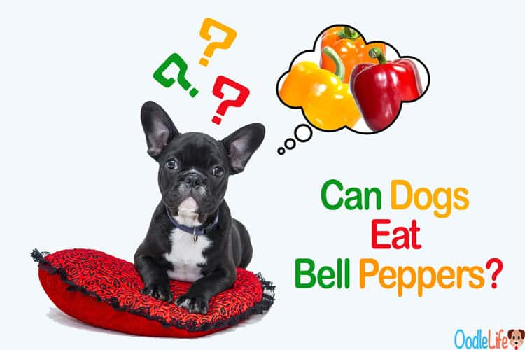 can dogs have bell peppers
