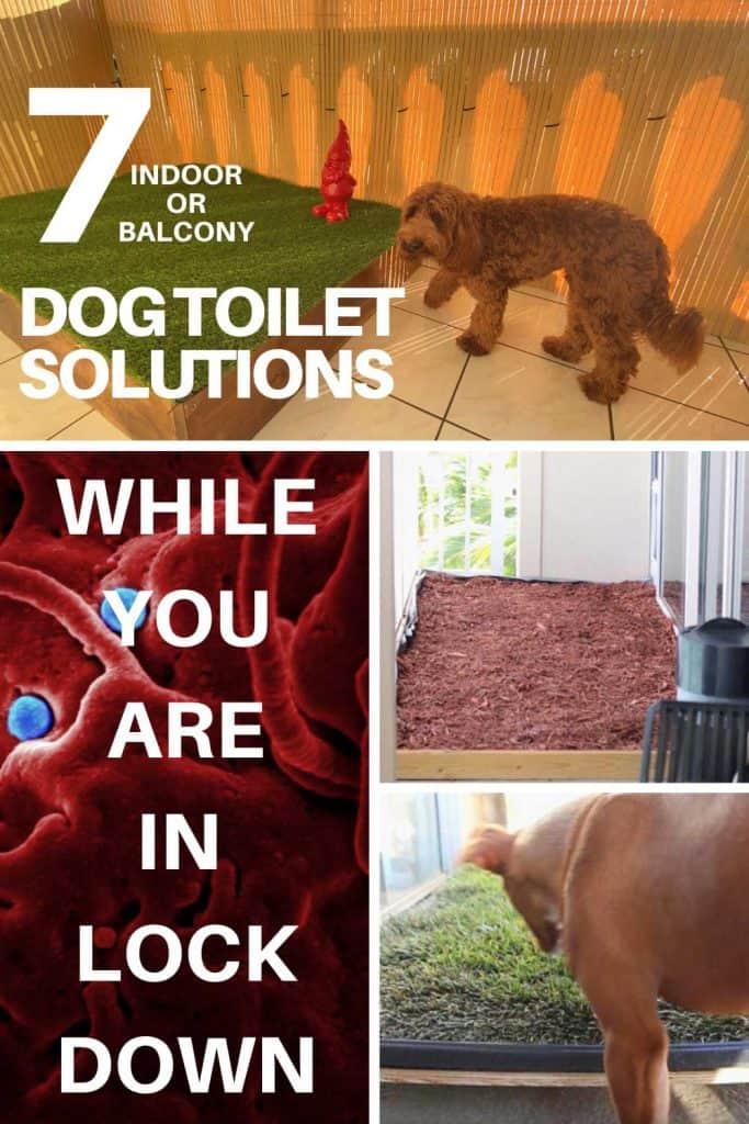 indoor diy dog toilet solution for quarantine