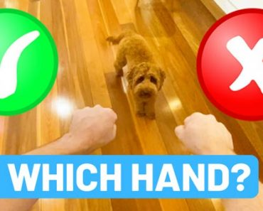 Which Hand Game - The Easiest Fun Scent Game To Teach A Puppy 6