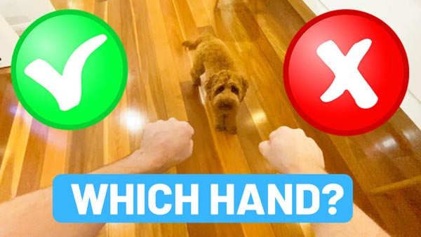 which hand game guessing game for puppies
