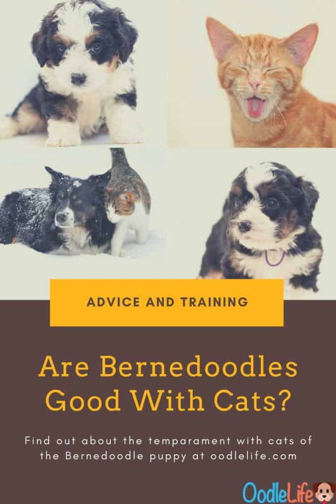 are bernedoodle good with cats