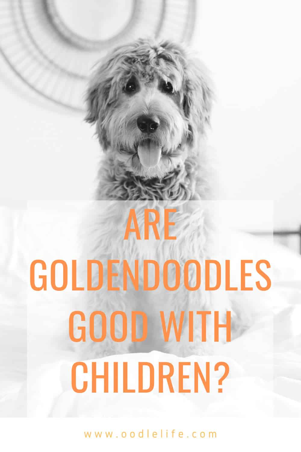 Are Goldendoodles Good With Kids The Truth About Children And Goldendoodles Oodle Dogs