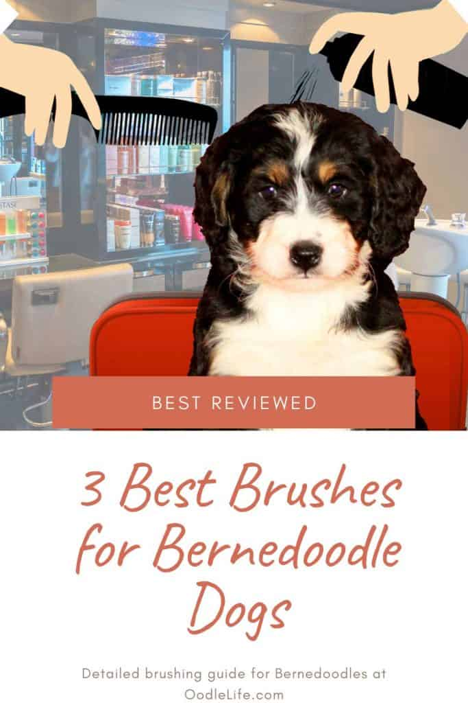 best brushes for bernedoodle dogs and puppies