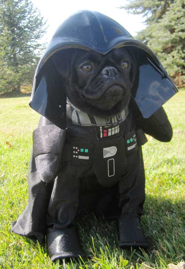Darth pug Star Wars dog