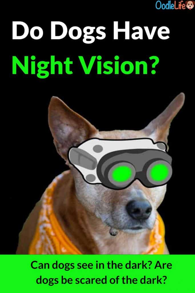 Do Dogs Have Night Vision? Can Dogs See In The Dark? 5 Amazing Dog Eye Facts 1