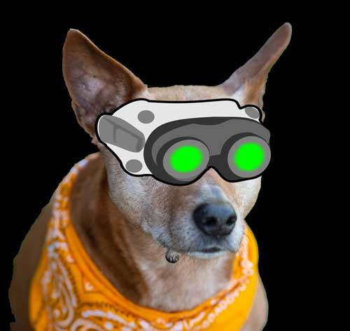 do dogs have night vision