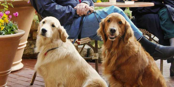 When to Neuter a Dog Large Breed (Best Advice) 1