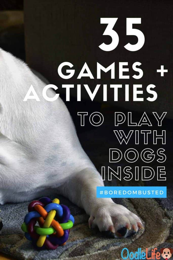 35 Activities and Games To Play with Dogs Inside (How To Dominate Indoor Isolation Boredom With Your Dog) 1