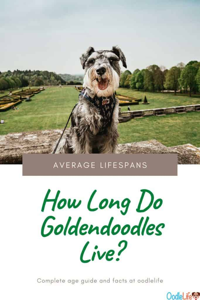 how long do goldendoodles live