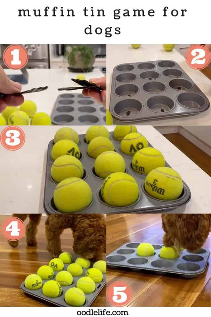 muffin tin game for dogs