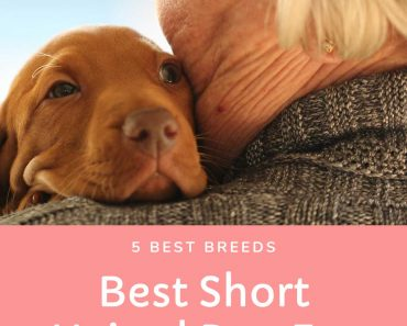best short haired dog for seniors