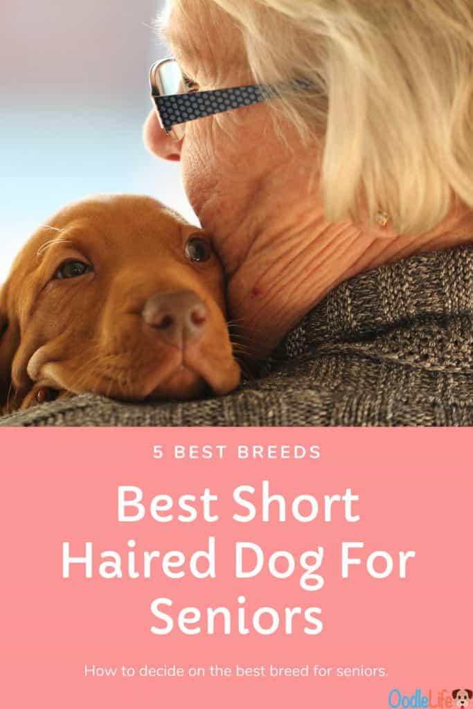 best small short haired dog for seniors
