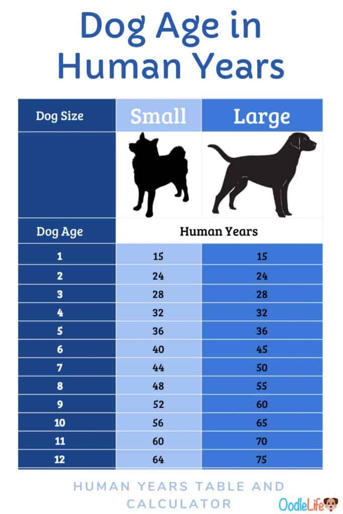 dog years for small dogs