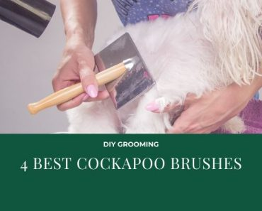best cockapoo brushes
