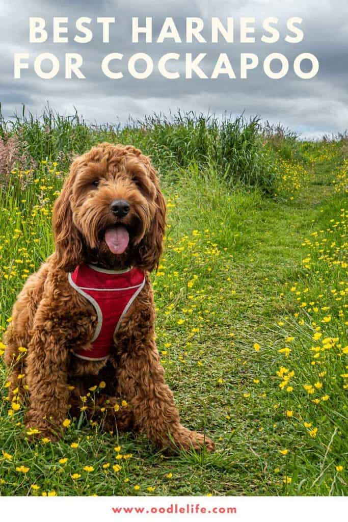 best dog harness for cockapoo