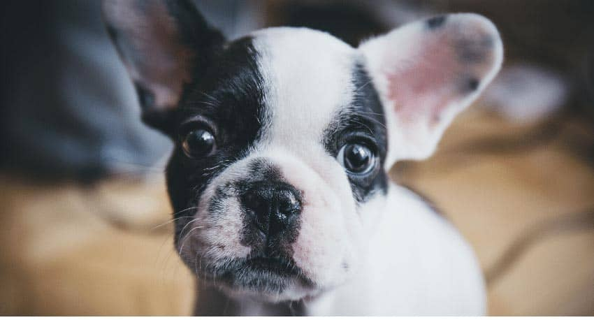 Best Small and Medium Dog Breeds for Families 2