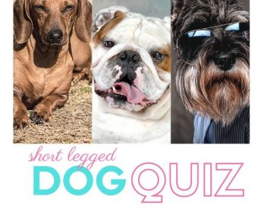 short dog quiz