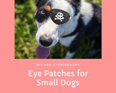 eye patch for small dog