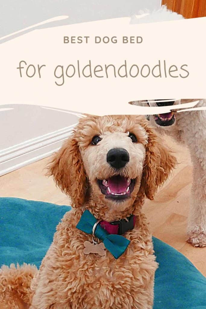 best dog bed for goldendoodles