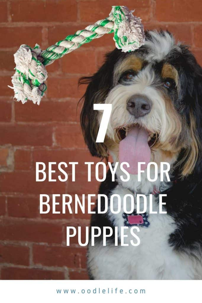 best toys for bernedoodle puppy