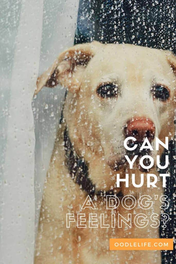 can you hurt a dog's feelings