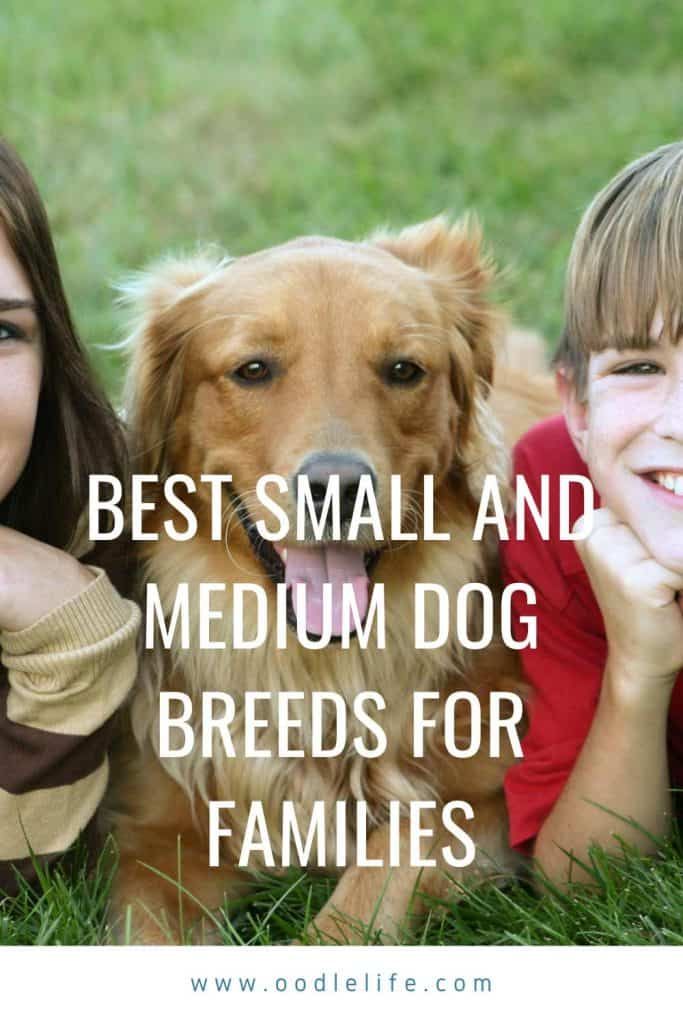 best small and medium dog breeds for families