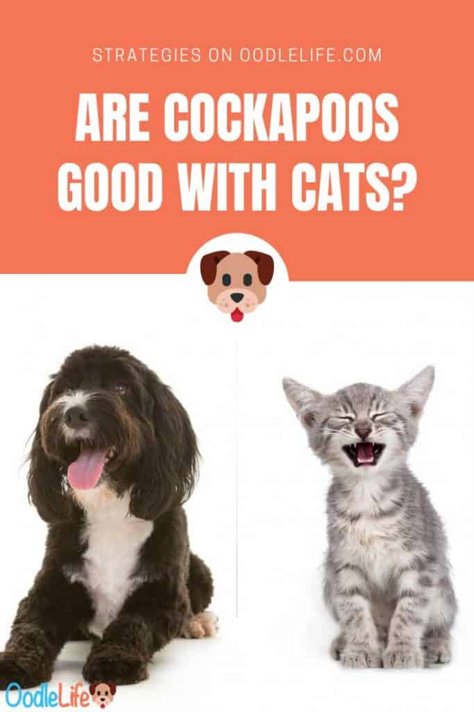 are cockapoos good with cats