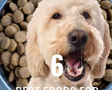 best foods for goldendoodle dogs