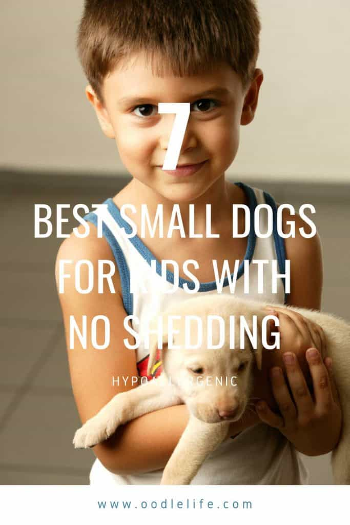 best small dogs for kids no shedding