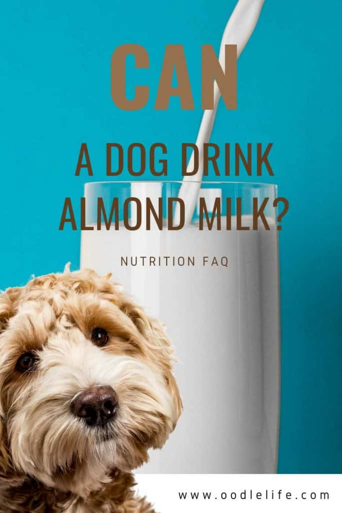 can dog's drink almond milk