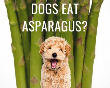 is asparagus ok for dogs