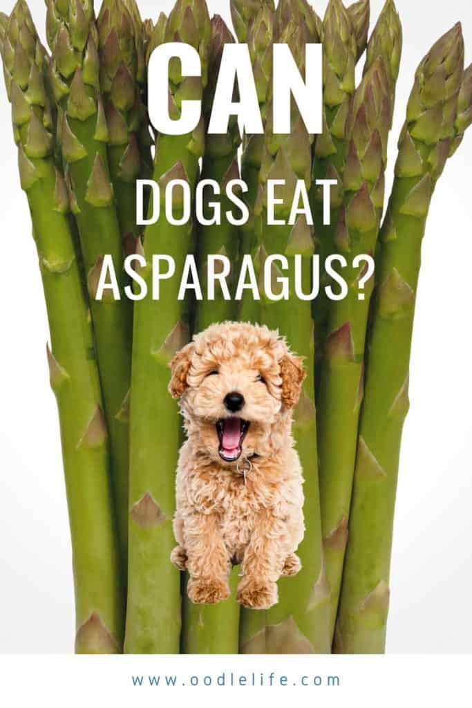 is asparagus ok for dogs