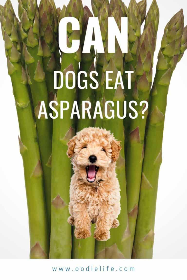Is Asparagus OK for Dogs? Is Asparagus Poisonous to dogs?