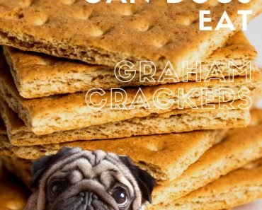 can dogs eat graham crackers