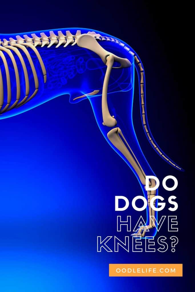 do dogs have knees