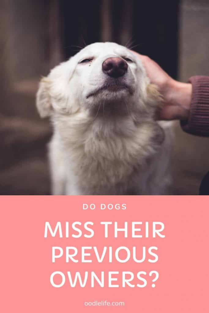 do dogs miss their previous owners