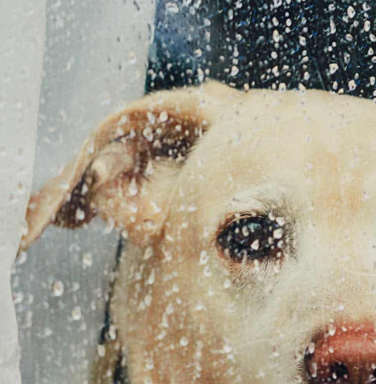 Can You Hurt a Dog's Feelings? Best Advice on Keeping a Happy Dog