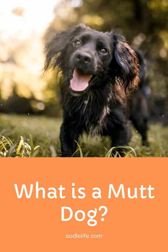 what is a mutt dog