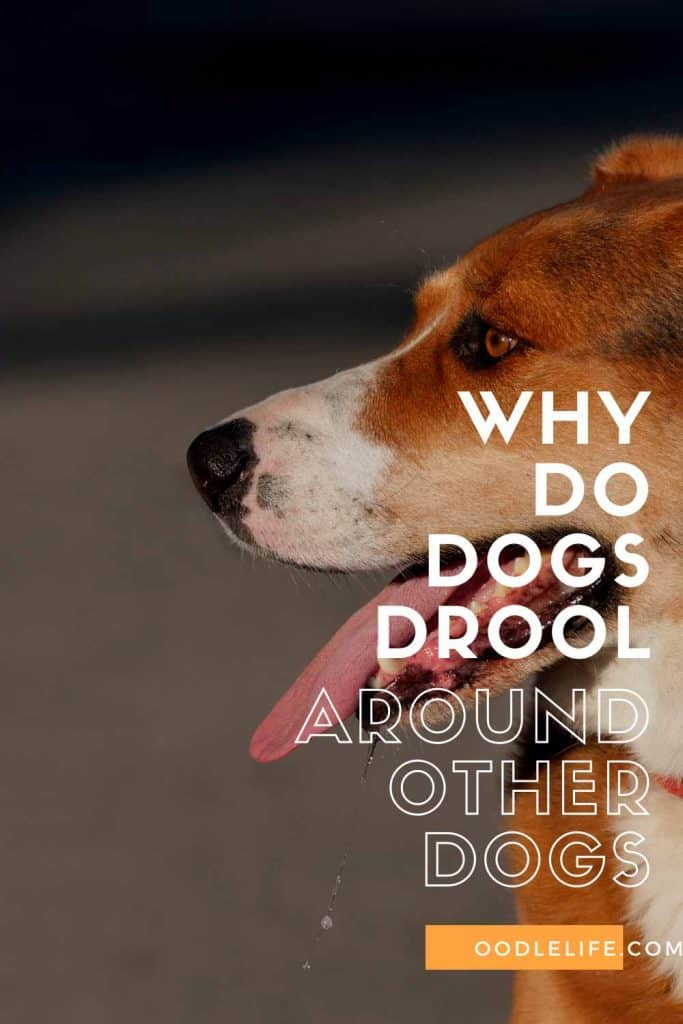 why do dogs drool around other dogs