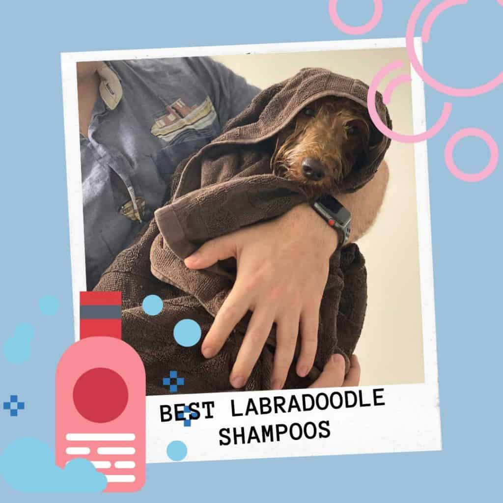 what are the best labradoodle shampoos