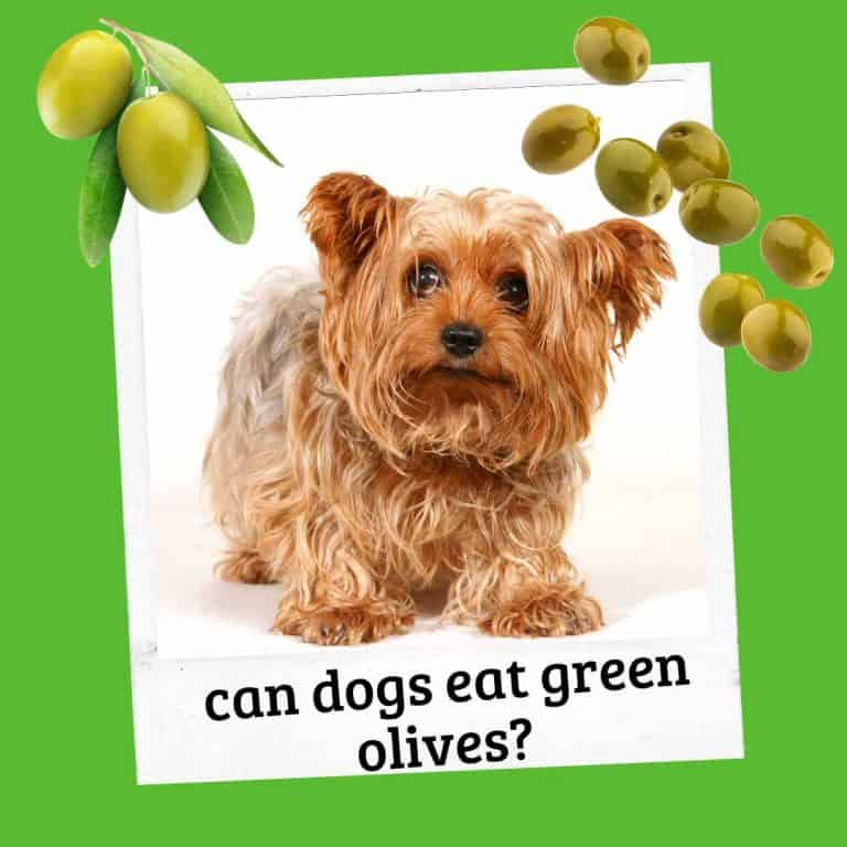 Can Dogs Eat Green Olives? (What To Do)