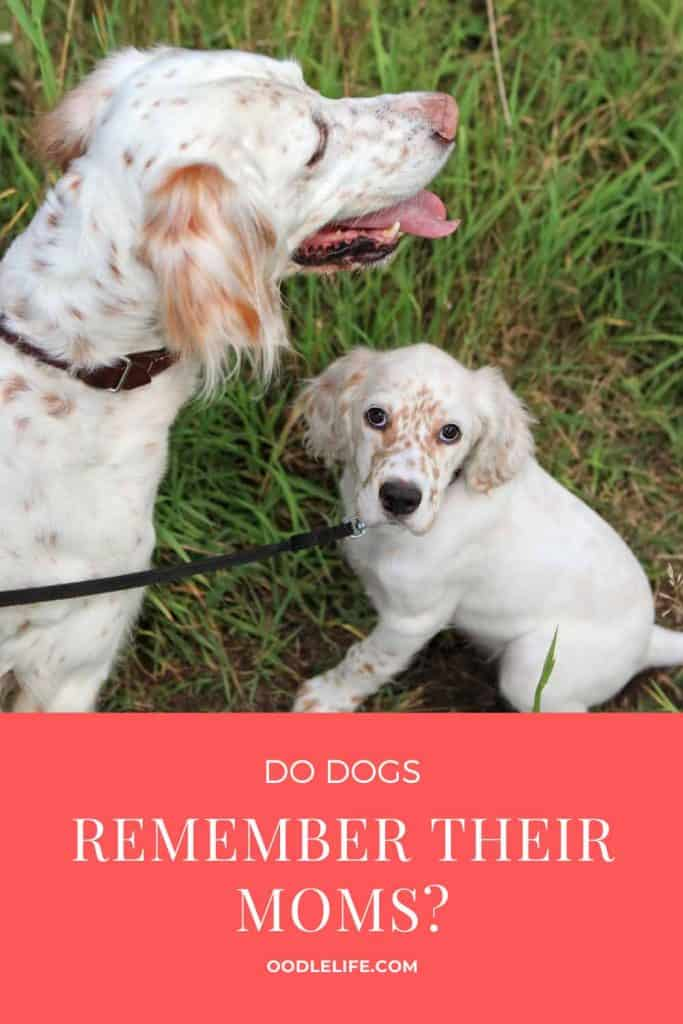 do dogs remember their moms