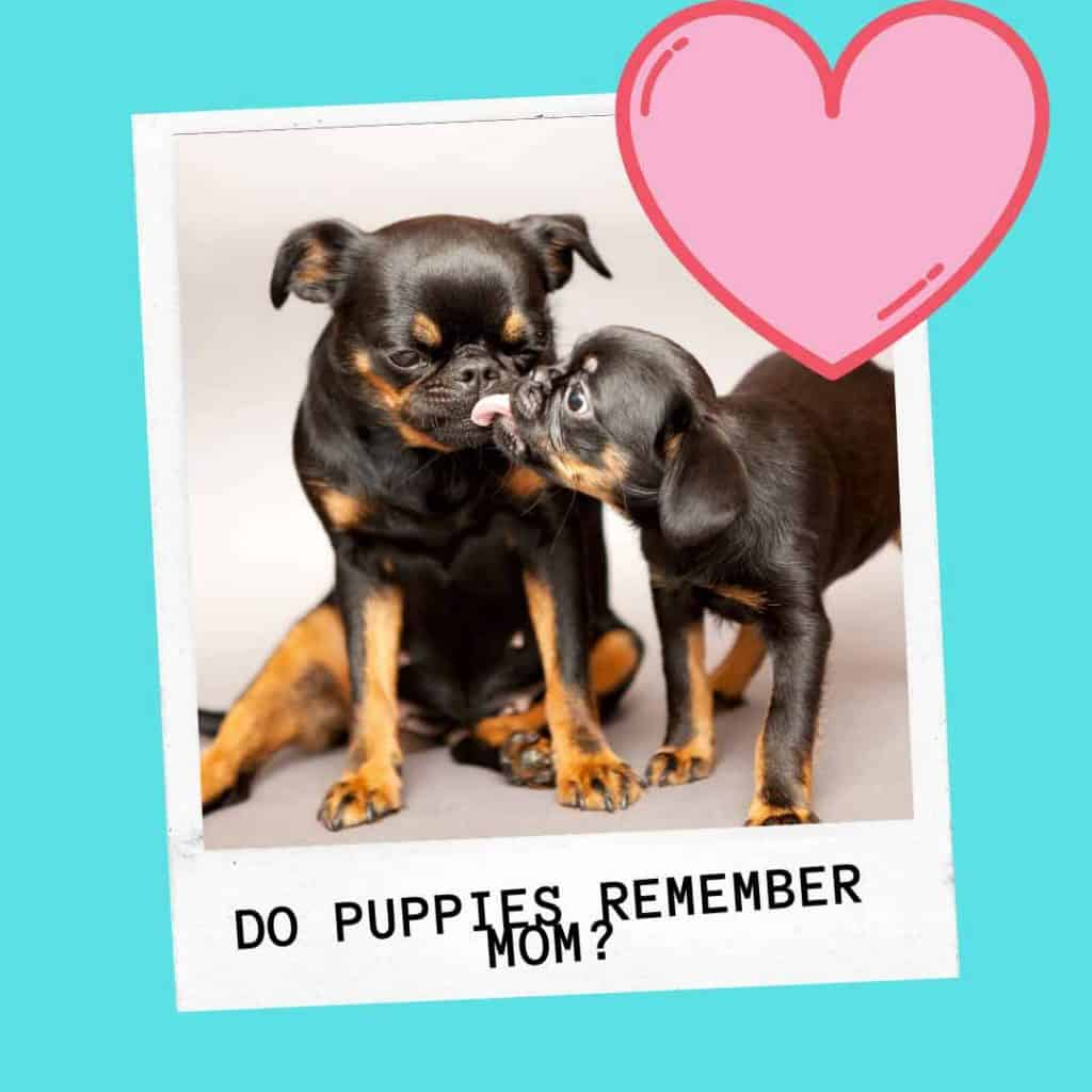 do puppies remember their moms
