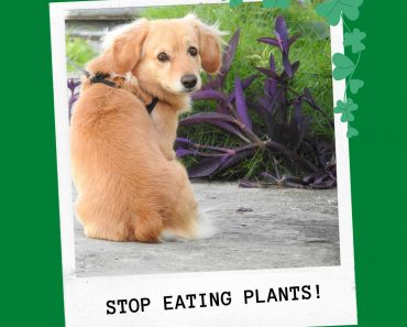 how to stop dog eating plants